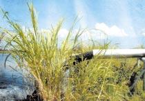 Contaminación al lago en nuestras urbanizaciones